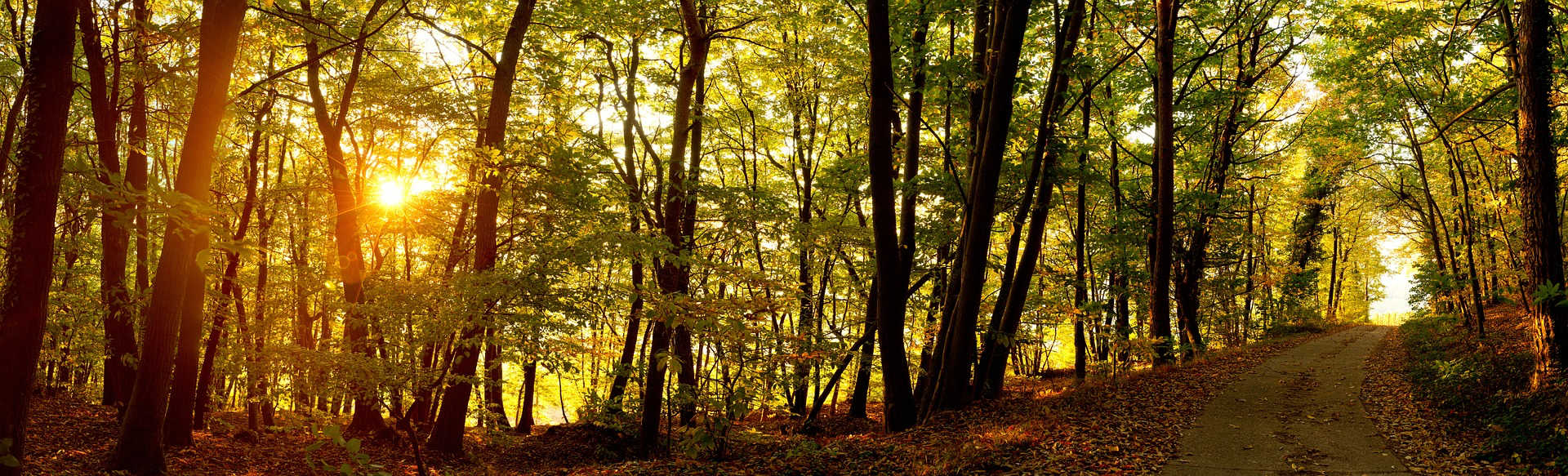 Brainspotclearing Wald Sonne Weg Abend www.phaidros.org