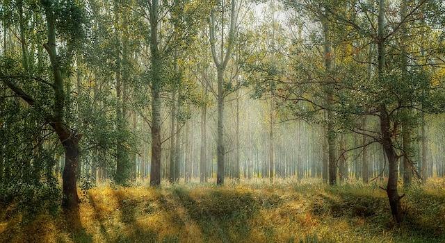 Wald Einkehr ruhe