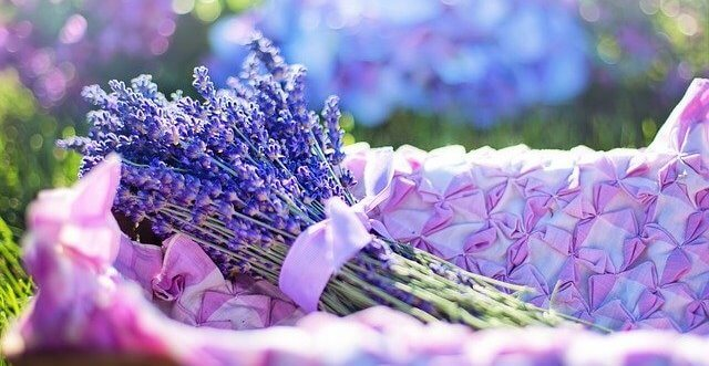Lavendel Heilpflanze Seele www.phaidros.org